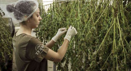 AMAZING CANNABIS INDUSTRY TRAINING VIA GREEN CULTURED